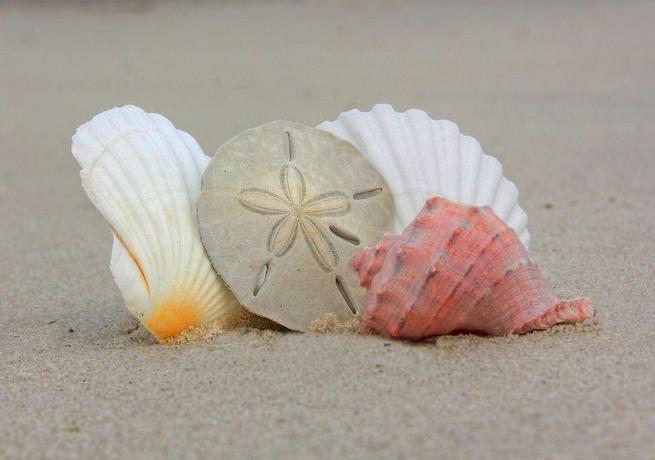 sea-shells-on-beach-clip-art