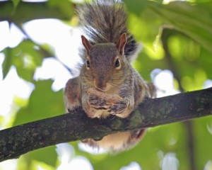 Food-Talk-4-U-squirrel