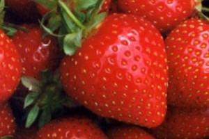 food-talk-4-u-strawberry