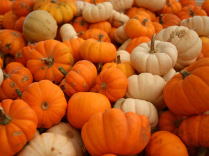 plenty-of-pumpkin`