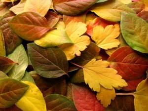 AutumnleavesST