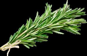 Rosemary-food-talk-4-you