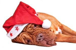 tired-santa-dog