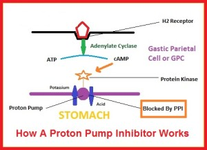 how-proton-pump-inhibitors-work