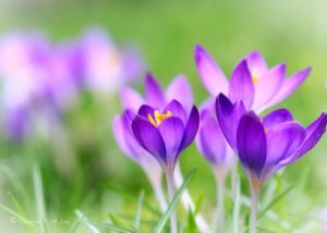 463483-beautiful-flowers-spring-flowers-blooming